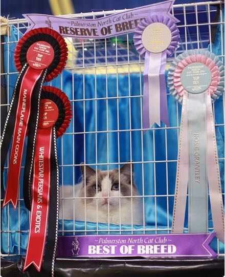Palmerston North Cat Show