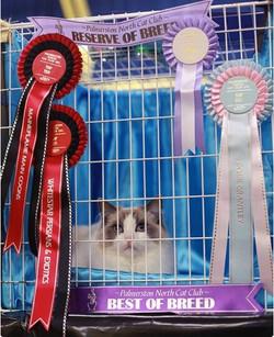 Palmerston North Cat Show