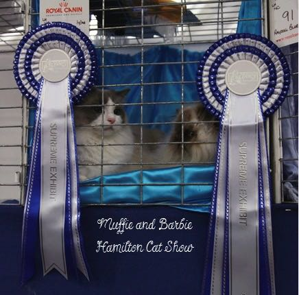 Hamilton Cat Show