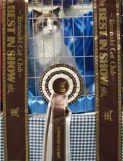 Taranaki Cat Show