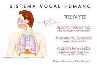 El sistema vocal humano