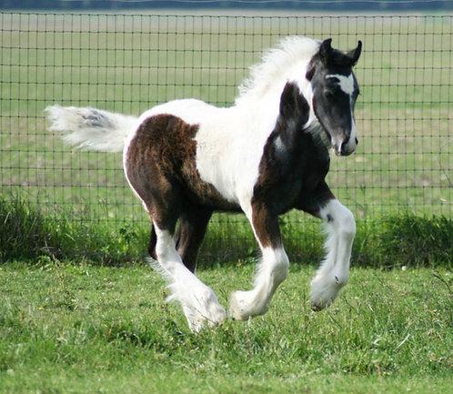 Registration for horse under age 6 months