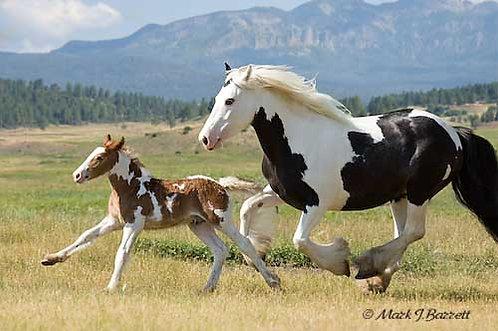 Horse Lease Fee