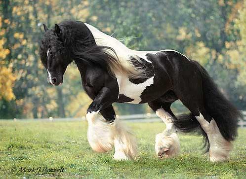 Registration for horse over age 3