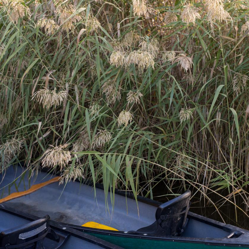 Canoe glenelg reeds