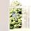 Thumbnail: FensterBild Klarheit