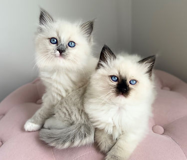 seal mitted and blue mitted.jpg
