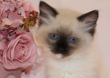 seal mitted 2.jpg