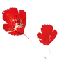 coquelicot_edited.png