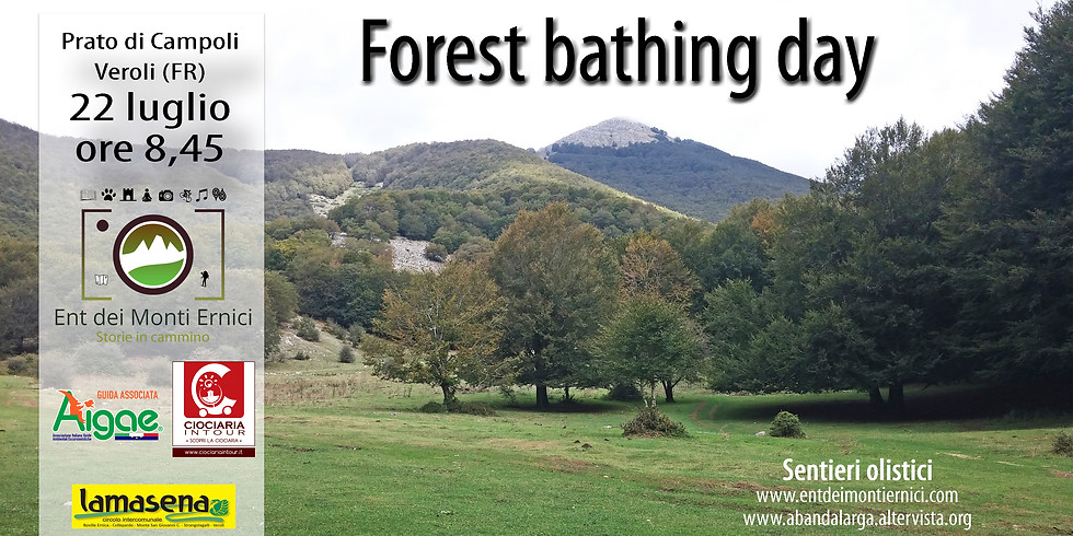 Forest bathing day - sentieri olistici