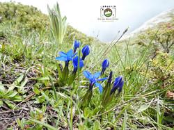 Flora dei monti Ernici