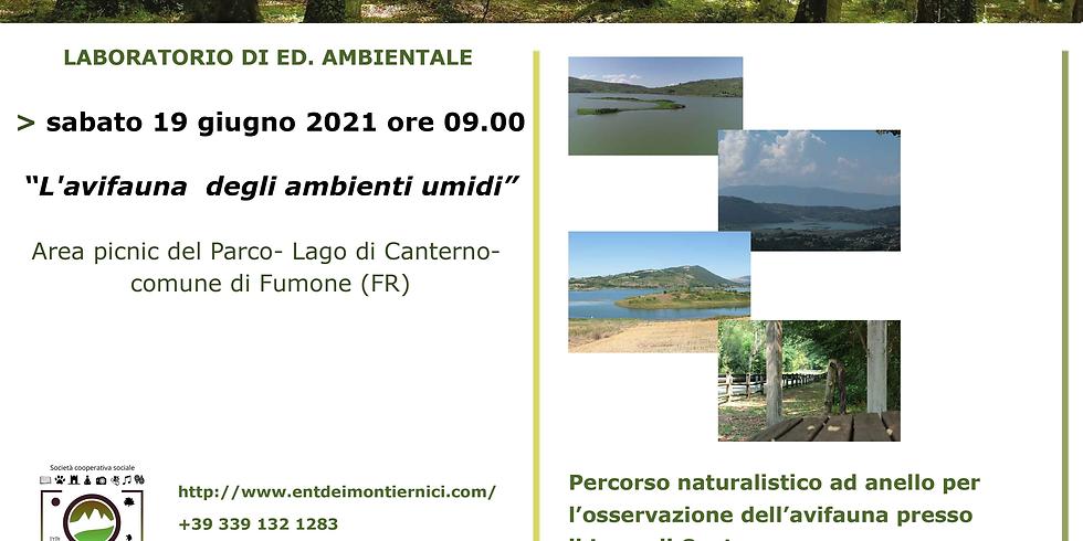 Vivi i Parchi del Lazio - L'avifauna degli ambienti umidi
