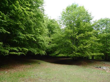 Forest bathing: il benessere nel bosco. Scopri la nostra nuova attività !!!