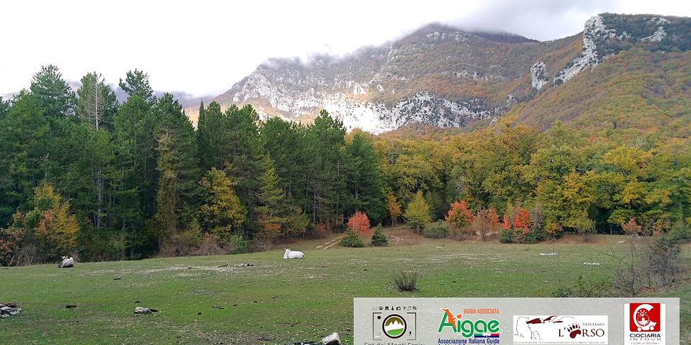 Trisulti e Colle del Vomero - Sentieri olistici