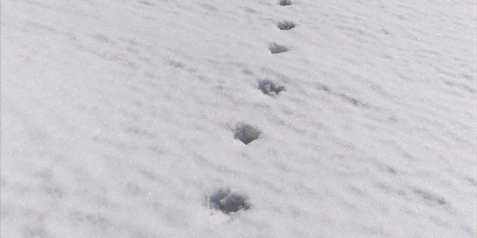 Snow-tracking - ciaspolata sulle tracce della fauna selvatica