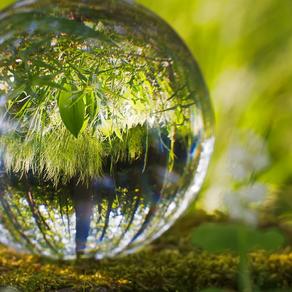 A Sustentabilidade do Meio Ambiente