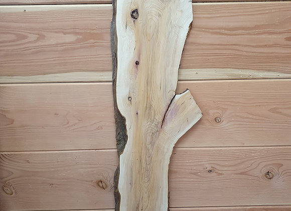 Natural shaped Yew