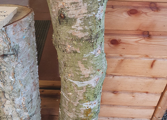 Shiitake Pre-innoculated Mushroom log