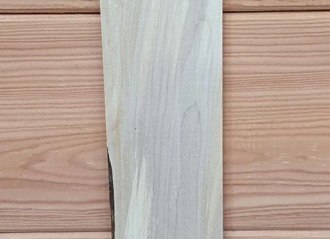 Sycamore offcut