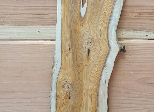 Natural edge Yew