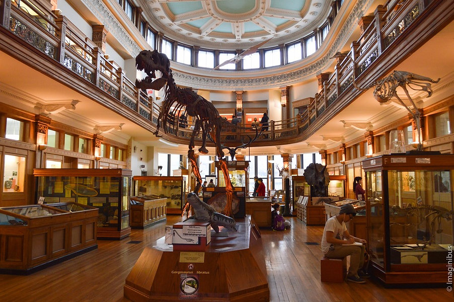 Redpath+Museum,+Montreal,+Dinosaur.jpg