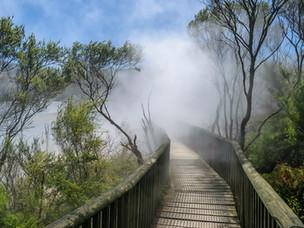 steaming lake and board walk at Kuirau P