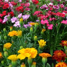 Garden_-_Indian_-_005-604x400.jpg