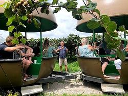 Kiwifruit Carts tours.jpg