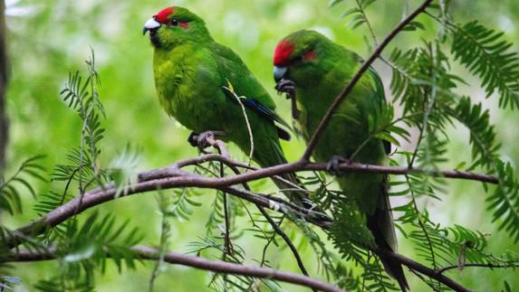 Wildlife on Stewart Island.jpg