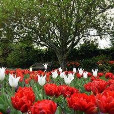 Hamilton-Gardens-Victorian-Flower-Garden