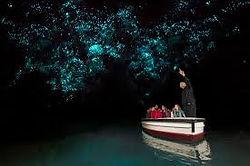 Waitomom Glow Worm tour from Tauranga Port