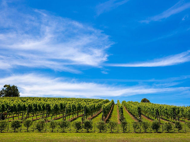 Vineyard on Waiheke Island Tour