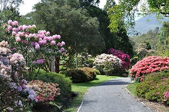 Pukeiti gardens 2.jpg