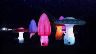 festival of lights 3.jpg