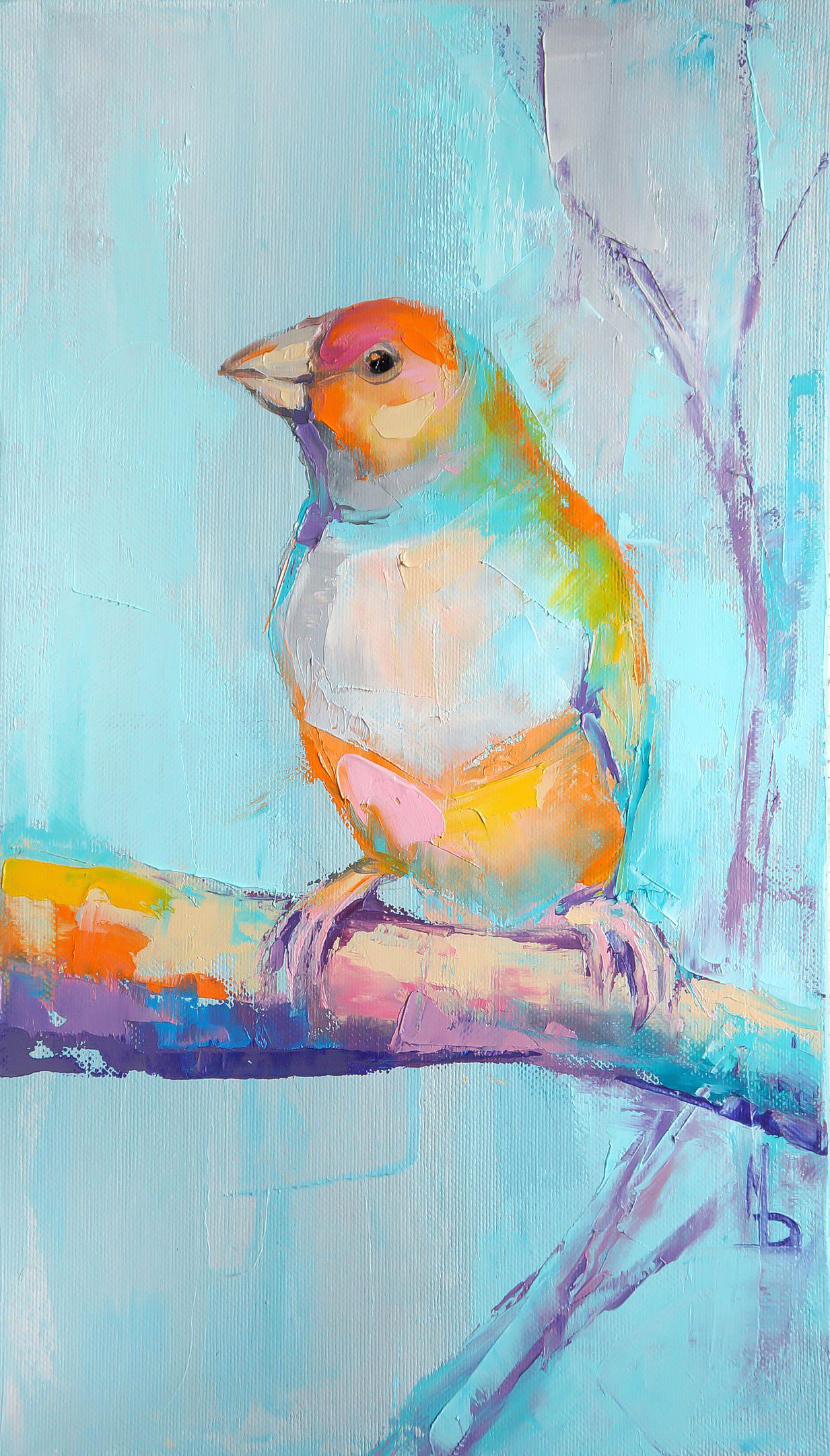Амадин голубой / blue finch