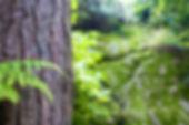 forest-tree-tree-trunk-bark.jpg