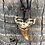 Thumbnail: Tiger Shark Tooth Necklace Made in Fiji