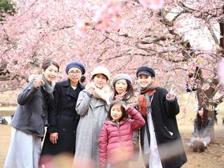 一足早い桜撮影会無事終了いたしました。