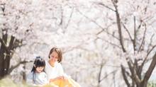 3月7日(木)桜撮影会募集開始 都筑区 国営昭和記念公園