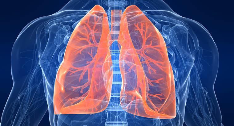 Como Aumentar Tu Capacidad Pulmonar Y Cuales Son Sus Veneficios