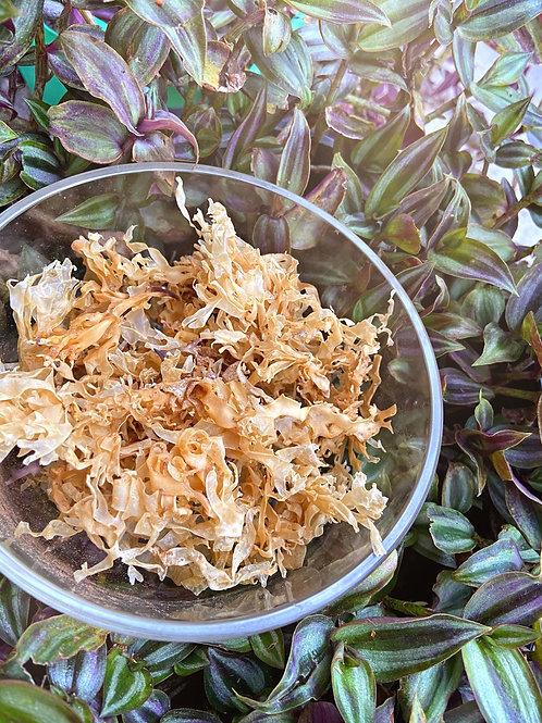 Golden Irish Moss (Chrondus Crispus)