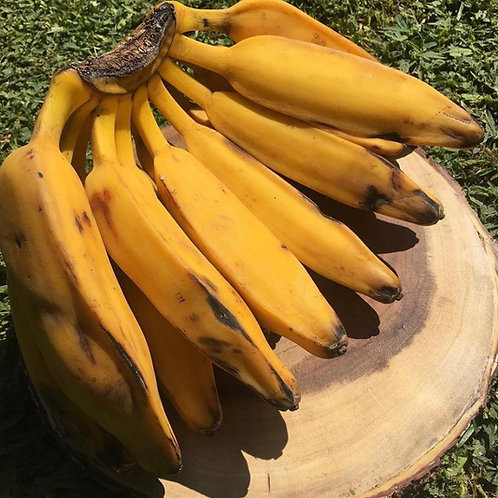 Burro Bananas (alkaline approved)