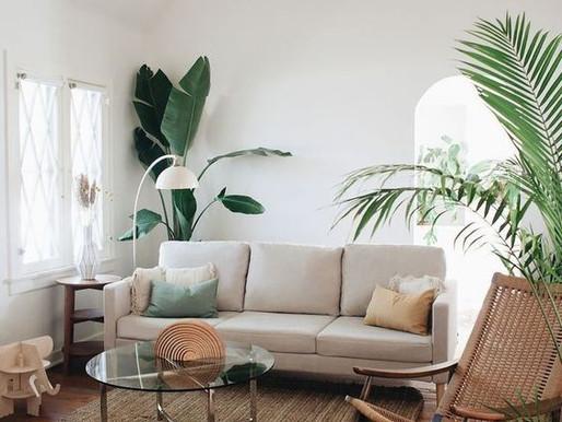 Selección de plantas decorativas de acuerdo al estilo de diseño de tu espacio.