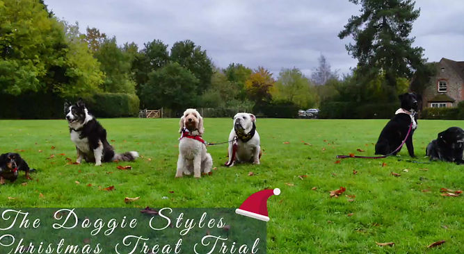 Doggie Styles Christmas Treat Trial