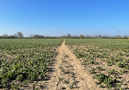 Crossing through crop fields
