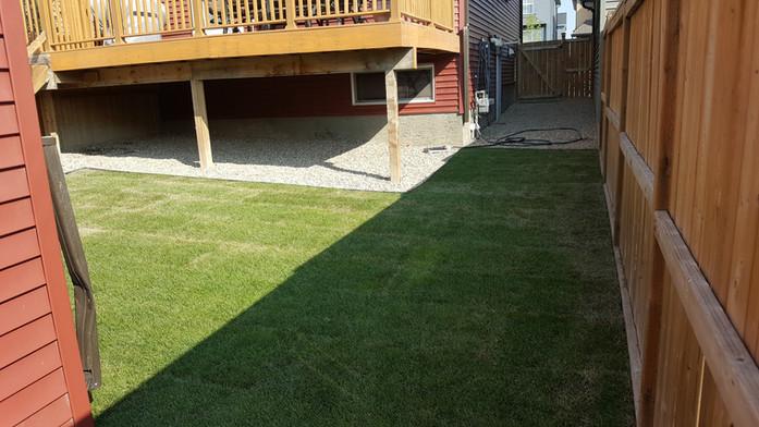 Back yard Lawn & Rock Installation