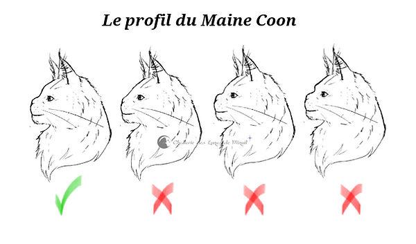 Profil Maine Coon.jpg