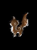 mini coon brown tortie blotched et blanc