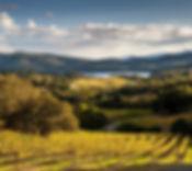 buehler-cellars-winery-vineyard.jpg