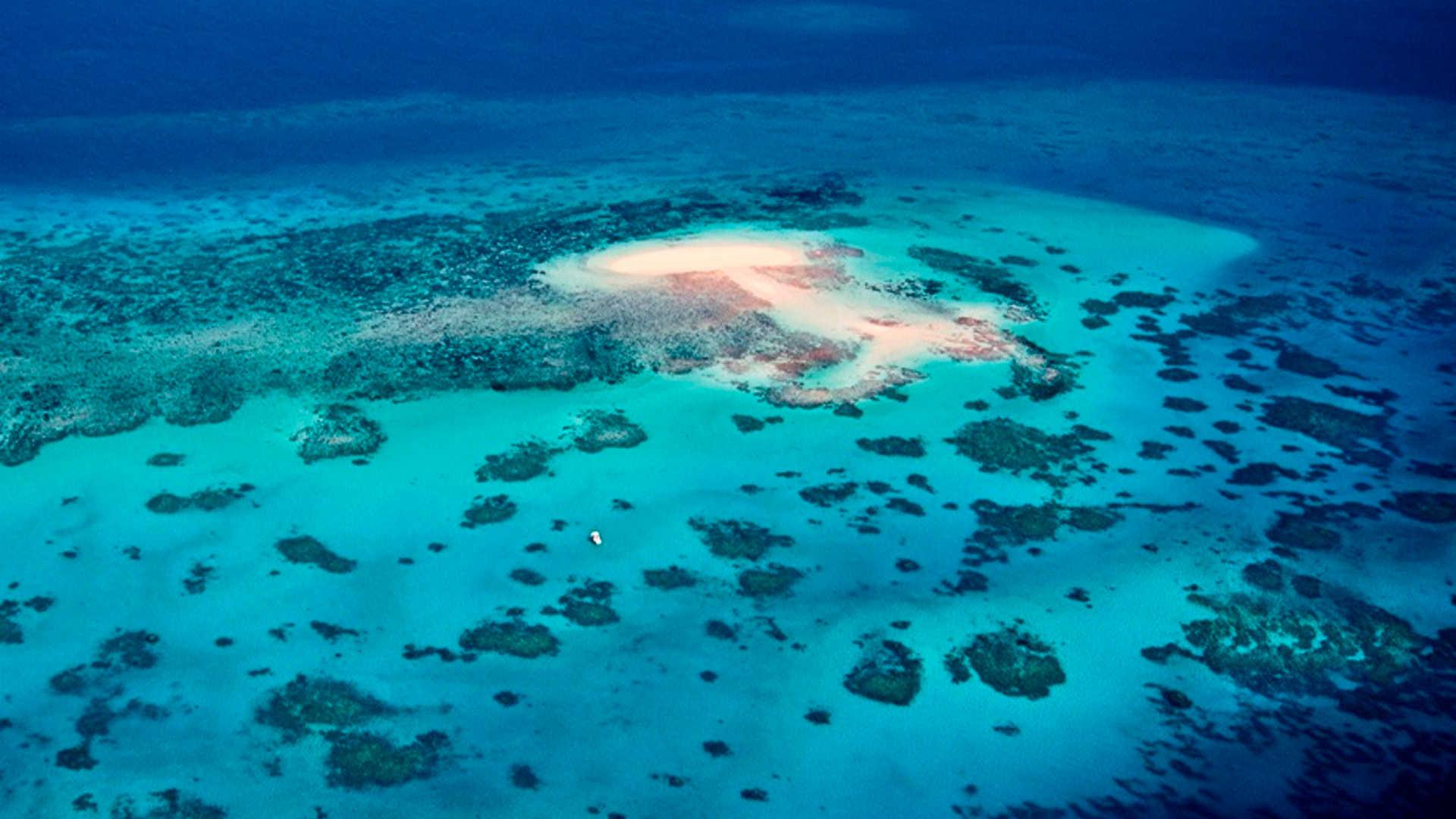 Vlassof Reef